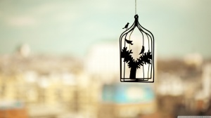 birds_cage_photo_hd-wallpaper-1366x768