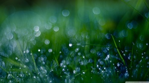 fresh_green_grass_bokeh-wallpaper-1366x768