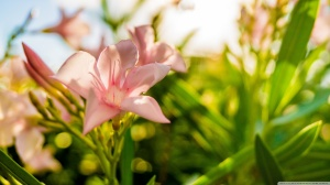 bloom_4-wallpaper-1366x768